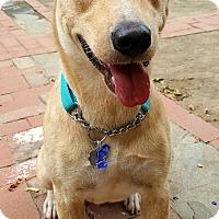 Adopt A Pet :: Tula - Santa Monica, CA