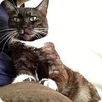 Adopt A Pet :: Chowder - Naples, FL