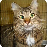 Adopt A Pet :: Cross-eyed