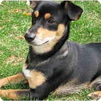 Adopt A Pet :: Mooney - Waukesha, WI