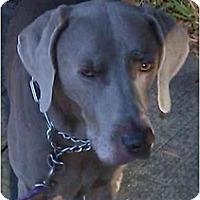 Adopt A Pet :: Kole - Eustis, FL