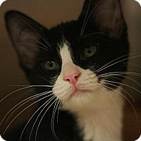 Adopt A Pet :: Blake - Canoga Park, CA