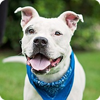 Adopt A Pet :: Petey - Kingwood, TX