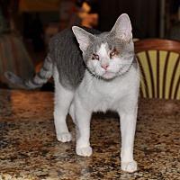 Adopt A Pet :: Lexie - St. Charles, IL