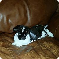 Adopt A Pet :: Vander - Williston, FL