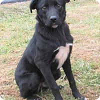 Adopt A Pet :: Joe - Reeds Spring, MO