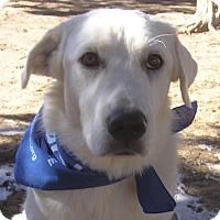 Adopt A Pet :: Blizzard - Cross Roads, TX