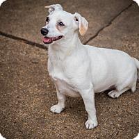 Adopt A Pet :: Blanca - Houston, TX