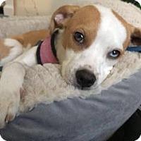 Adopt A Pet :: Cate - Gainesville, FL