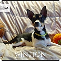 Adopt A Pet :: Winston - DeForest, WI