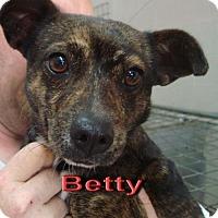 Adopt A Pet :: Betty - Coleman, TX