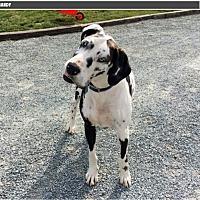 Adopt A Pet :: Mandy - York, PA