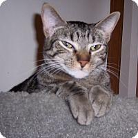 Adopt A Pet :: Maxie - Richmond, VA