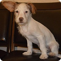 Adopt A Pet :: Wally - Corona, CA