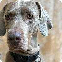 Adopt A Pet :: Brandy - Sun Valley, CA