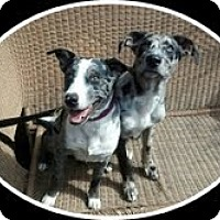 Adopt A Pet :: DALLAS-JJ - Roundup, MT