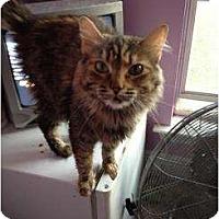 Adopt A Pet :: Sophia - Mobile, AL
