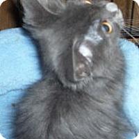 Adopt A Pet :: Celeste - Dallas, TX