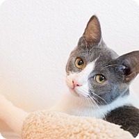 Adopt A Pet :: Von - Chicago, IL