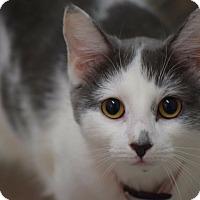 Adopt A Pet :: Lucy - Willington, CT