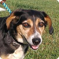 Adopt A Pet :: Hanna Girl - Brattleboro, VT