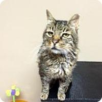 Adopt A Pet :: Bob - Quilcene, WA
