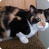 Adopt A Pet :: Maggie - Witter, AR