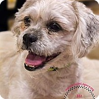 Adopt A Pet :: Cassie - Staten Island, NY