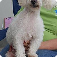 Adopt A Pet :: Gucci - Nicholasville, KY