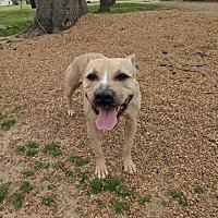 Adopt A Pet :: Gypsy - Covington, TN