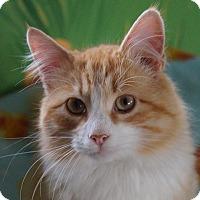 Adopt A Pet :: Bill - Maynardville, TN