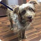 Adopt A Pet :: Bell (6 mo 20.4 lb)