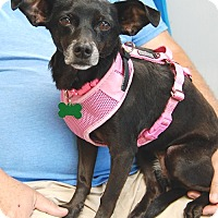 Adopt A Pet :: Jackie - West Los Angeles, CA