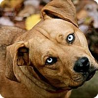 Adopt A Pet :: Paul Newman - Hastings, NY