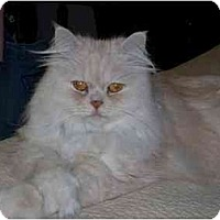 Adopt A Pet :: Catty - Catasauqua, PA