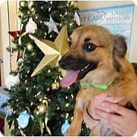 Adopt A Pet :: Ramona - Mission Viejo, CA