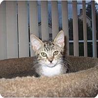 Adopt A Pet :: JoJo - Catasauqua, PA