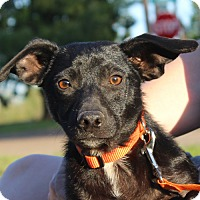 Adopt A Pet :: Linus - in Maine - kennebunkport, ME