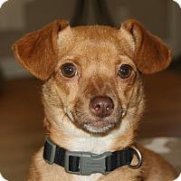Adopt A Pet :: Sierra - Edmonton, AB