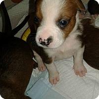 Adopt A Pet :: SAMMIE - Hollywood, FL