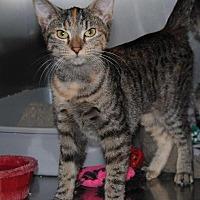 Adopt A Pet :: Agatha - Parsons, KS