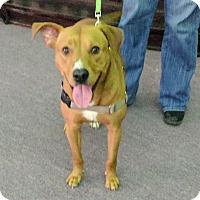 Adopt A Pet :: Indy - Brattleboro, VT