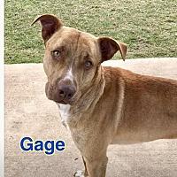 Adopt A Pet :: GAGE - Ocala, FL