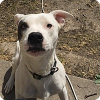 Adopt A Pet :: Cub - Manhattan, KS