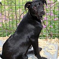 Adopt A Pet :: Tiana - Towson, MD