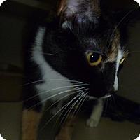 Adopt A Pet :: Tori - Hamburg, NY