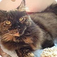 Adopt A Pet :: Frenchy - Alexandria, VA