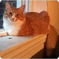 Adopt A Pet :: Deunan - Alexandria, VA