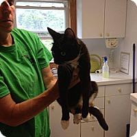 Adopt A Pet :: Boots - Lancaster, MA