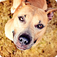 Adopt A Pet :: Mabel *Adoption Fee Waived! - Milwaukee, WI